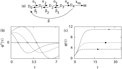 Estimation of mean burst size from sequence size function ϕ(τ).For the transcriptional scheme shown in (a), the variations of ϕ″(τ) and ϕ(τ) as a function of time τ (scaled by 103) are shown in (b) and (c) respectively. The three lines correspond to three different values of β, 50 (dashed line), 100 (dotted line) and 200 (dashed-dotted line), while keeping km = 500: Exact burst size for these three cases are 11, 6 and 3.5, respectively. Estimated mean burst size has been indicated by filled symbols and the inflexion points in the sequence size function are shown by empty symbols. Other parameters: α1 = 1,α2 = 0.5,α3 = 0.25,α4 = 0.75,β1 = 0.1,β2 = 0.2,β3 = 0.5.
