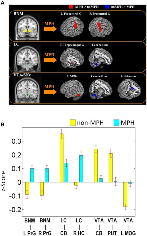 (A) Brain regions that show different connectivities between MPH and noMPH groups; (B) Effect size (z-value) of rsFC of brain regions that show different connectivities between MPH and noMPH groups. Values are mean ± standard error; BNM, basal nucleus of Meynert; LC, locus coeruleus; VTA/SNc, ventral tegmental area/substantia nigra pars compacta; PrG, precentral gyrus; MOG, middle occipital gyrus; HC, hippocampus; MOG, middle occipital gyrus; CB, cerebellum; PUT, putamen.