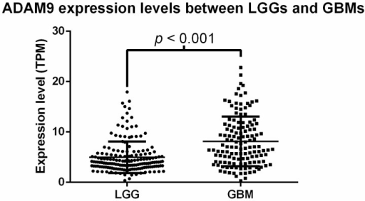 Comparison of ADAM9 mRNA expression levels between LGG and GBM tumor samples. The LGG tumor samples displayed an average of 4.098 ± 2.132 TPM units of ADAM9 mRNA expression, while GBM tumor samples displayed an average of 8.139 ± 4.922 TPM units of ADAM9 mRNA expression. The difference was significant between the two subtypes, p < 0.001, t-test. TPM, transcripts per million; LGG, lower-grade glioma; GBM, glioblastoma.