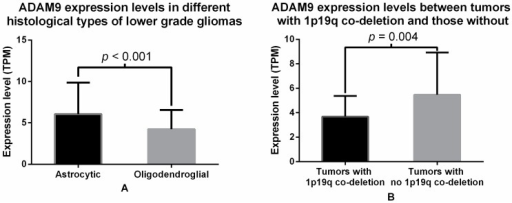 (A) Comparison of ADAM9 mRNA expression levels between LGG tumor samples with different histological type. Black bar represents the average ADAM9 mRNA expression from astrocytic tumors (6.051 ± 0.460 TPM units), while white bar represents ADAM9 mRNA expression in oligodendroglial tumors (4.228 ± 0.231, TPM units). The difference is significant with a p-value of <0.001, t-test; (B) Comparison of ADAM9 mRNA expression levels between LGG tumor samples with and without 1p/19q co-deletion. Black bar represents the average ADAM9 mRNA expression in tumors with 1p/19q co-deletion (3.386 ± 0.289 TPM units), while white bar represents ADAM9 mRNA expression in tumors with no 1p/19q co-deletion (5.476 ± 0.332, TPM units). The difference is significant with p-value of 0.004, t-test.