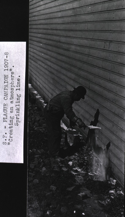 <p>View of a U.S. Public Health and Marine Hospital Service worker, bent forward at waist, using a trowel to sprinkle chlorinated lime on the ground along the length of a building for the purpose of destroying fleas and preventing the spread of plague during the San Francisco plague campaign.</p>