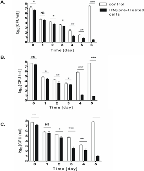 Macrophages stimulated with interferon-γ kill engulfed S. aureus strains: Newman (A), ATCC 25923 (B), and COL (C) more efficiently than non-stimulated cells.Cells were stimulated with recombinant human IFNγ overnight at concentrations equivalent to human therapeutic doses (100 U ml−1), and then allowed to phagocytose three different strains of S. aureus for 2 h. Infected cultures were processed as described in the legend for Fig. 3A and live bacteria in the whole cultures (CFU) were enumerated up to 14 days postphagocytosis. Since at the longer timepoints no bacterial growth was detected (CFU = 0) these points were not presented on the graph. The data shown is representative of at least three separate experiments, performed in triplicate, using hMDM derived from different donors. Bars represent mean CFU value ±SD. *, p<0.05; **, p<0.01; ***, p<0.001. NS-not significant.