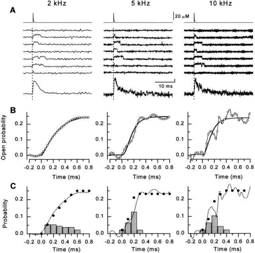 Activation of the RyR channel by rapid Ca2+ spikes produced by flash photolysis of DM-nitrophen measured at three different bandwidths (left to right: 2, 5, and 10 kHz, respectively). (A, top) Time course of the reconstructed calcium spikes applied to the bilayer. (Middle) Sets of representative single channel records measured at +40 mV. The flash was applied at t = 0 ms (dotted lines). (Bottom) Ensemble currents constructed from 32–64 individual episodes. The vertical calibration denotes 20 and 1 pA for the center and bottom. (B) Exponential fits to the rising phase of the ensemble Po (expanded scale). Only every third point of Po is plotted for clarity (○). The continuous lines were obtained by fitting the data by the function:Po=Pmax1−e−tτana,where τa was 0.22 ± 0.01, 0.10 ± 0.01, and 0.09 ± 0.02 ms and n was 1.4 ± 0.4, 3.0 ± 0.5, and 2.8 ± 0.9 for 2, 5, and 10 kHz bandwidths, respectively. (C) The probability density of first latency (bars), the respective cumulative first latency distributions of channel openings (•), and open probability (dashed lines; same curve as ○ in B) at 2, 5, or 10 kHz.