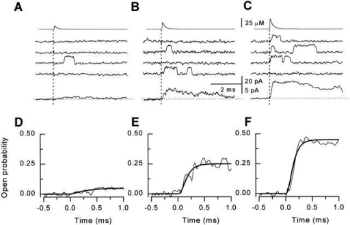 Response of single RyR channels to spikes of different amplitude. In A–C, the flash energy setting was 45, 47.5, and 50, respectively, corresponding to peak Ca2+ concentrations of 9, 18, and 27 μM. (Top) Time course of the reconstructed calcium spikes applied to the bilayer. (Middle) Sets of representative single channel records measured at +40 mV. The flash was applied at t = 0 ms (dotted lines). (Bottom) Ensemble currents constructed from 32–96 individual episodes. (E–F) Exponential fits to the rising phase of the ensemble Po (expanded scale), corresponding to A–C, respectively. The time course of activation was best described by the equation:Po=Pmax1−e−tτana,where τa = 0.27 ± 0.06, 0.09 ± 0.02, and 0.07 ± 0.01 ms, and na = 3.5 ± 1.4, 2.5 ± 0.8, and 2.5 ± 0.3 for the ensemble averages in A–C, respectively.