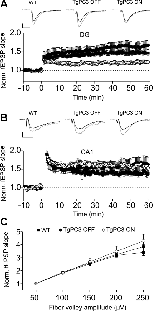 Effect of Premature Differentiation of Adult-Generated Granule Cells on Hippocampal Synaptic Plasticity(A) LTP of lateral perforant pathway synapses in the dentate gyrus is reduced in TgPC3 ON but not in TgPC3 OFF mice. Upper panel shows traces of fEPSPs immediately before (black traces) and after 50 min (gray traces) of high-frequency trains in WT, TgPC3 ON, and OFF mice. Averages of 10 traces for each example are shown. The stimulus artifact was digitally removed for display purposes. Scales: 5 ms and 100 μV wt; 25 μV TgPC3 OFF; 60 μV TgPC3 ON.(B) LTP of Schaffer collateral synapses measured in CA1 was unaffected by early PC3 gene activation (p > 0.2). Upper panel: representative fEPSPs before (black traces) and after (gray traces) high frequency stimulations in all conditions. Shown are averages of 10 traces each. The stimulus artifact was digitally removed for display purposes. Scales: 5 ms and 60 μV wt; 100 μV TgPC3 OFF; 100 μV TgPC3 ON.(C) The slope of input-output (I/O) curves at perforant-path synapses in dentate gyrus was similar in all three conditions.