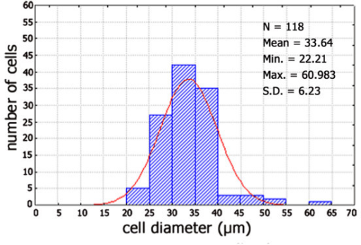 Size frequency histogram of PSA-NCAM immunoreactive neurons in human trigeminal ganglion from an adult subject (case 5). Cells present in 6 sections were measured. x-Axis values represent the mean cell diameters expressed in μm; y-axis reports values of relative percent frequency. Curve superimposed on the histogram represent the theoretical normal distribution.