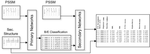 Graphical overview of the method. Graphic overview of the method used in training of the primary and secondary neural networks. 'PSSM' is a Position-Specific Scoring Matrix. 'Sec. Structure' is the raw output from secondary structure predictions. 'Primary Networks' are an ensemble of artificial neural networks (ANN) and 'B/E Classification' is the raw buried/exposed output from these ANNs. 'Secondary Networks' are also an ensemble of ANNs, trained to predict the relative surface exposure of an amino acid. The last box shows output from the web server.