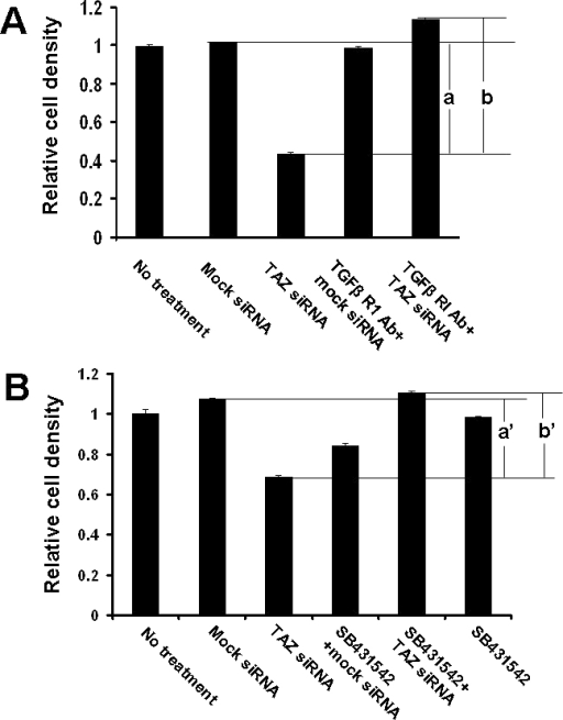 "TGFβ receptor antibody and TGFβ receptor inhibitor rescued the effect of TAZ siRNA on cell growth. A: NHC cells were treated with TGFβ receptor type I antibody together with mock siRNA or TAZ siRNA. Relative cell density was analyzed from three replicates. a: a significant reduction of cell density after TAZ siRNA treatment. ""b"": the cell growth inhibition was rescued by TGFβ receptor I antibody treatment. B: NHC cells were treated with TGFβ receptor inhibitor (SB431542) together with mock siRNA or TAZ siRNA. Relative cell density was analyzed from three replicates. ""a'"": a significant reduction of cell density after TAZ siRNA treatment. ""b'"": cell growth inhibition was rescued by SB431542. Data were represented as mean±se (p<0.05)."