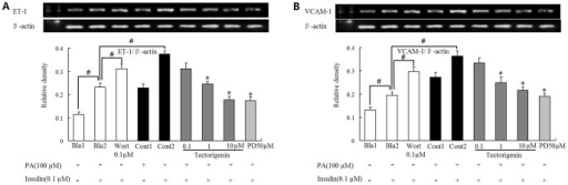 Tectorigenin reduced ET-1 and VCAM-1 expression in PA-stimulated endothelial cells.HUVECs were pretreated with tectorigenin, PD98059 or wortmannin (Wort) for 0.5 h and incubated with PA (100 μM) for another 2 h. Then cells were stimulated with or without insulin (0.1 μM) for 20 min. ET-1 (A) and VCAM-1 (B) mRNA expression was detected by RT-PCR. Salicylate was taken as a positive control. The results were expressed as the mean±SD of three independent experiments. #p<0.05 vs. blank 2 (Bla2); * p<.05 vs. control 2 (Cont2).