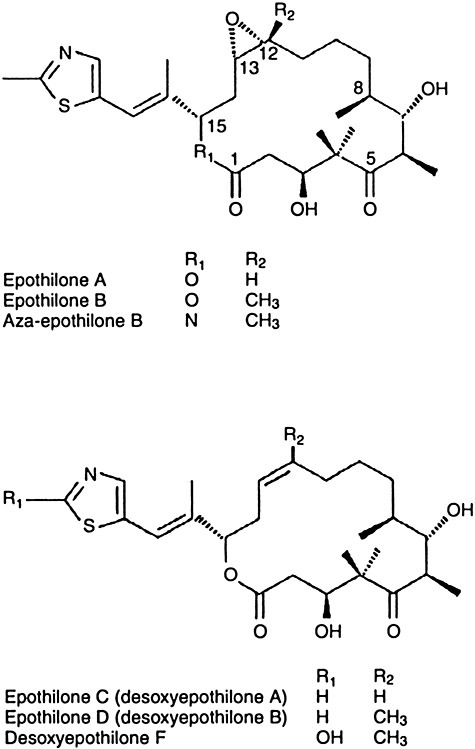 Structures of epothilones. Reprinted from Goodin and colleagues (2004) with permission.
