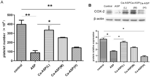 Analysis of platelet counts and COX-2 expression.(A) Platelet counts of rats underwent different treatments. (B) Western blot analysis of COX-2 expression in rats underwent different treatments.