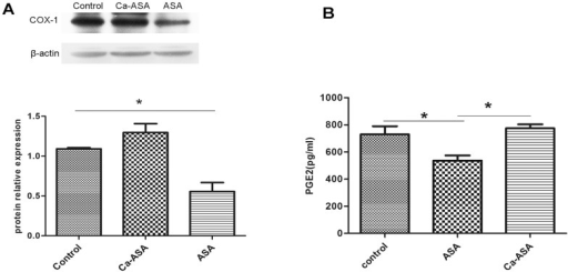 Effect of ASP and Ca-ASP on COX-1 expression (A) and PGE2 level (B) in rat gastric tissue.