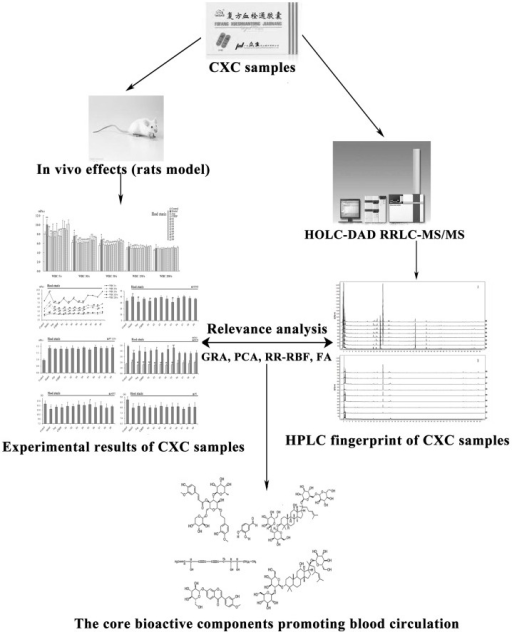 The research process for finding the bioactive components promoting blood circulation in CXC.