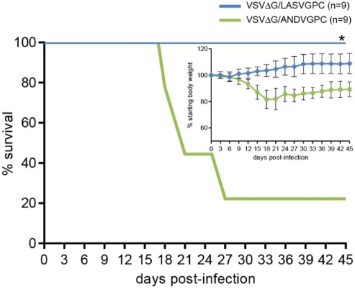 VSVΔG/LASVGPC protects strain 13 guinea pigs from infection / disease following challenge with a Malian Lassa virus isolate.Adult, inbred strain 13 guinea pigs were immunized with 1 x106 pfu of VSVΔG/LASVGPC (n = 9) or VSVΔG/ANDVGPC (n = 9) and challenged 28 days later with Lassa virus strain Soromba-R. Animals were monitored for disease progression including weight loss for up to 45 days. * p = 0.001.