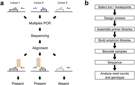 Principle of count-based genotyping of structural variation (a) and workflow of a genotyping experiment (b). a: Genotyping of three polymorphic TE insertion loci. Gray and dotted boxes represent present and absent insertions, respectively. Blue arrows represent PCR primers and orange lines depict sequencing reads