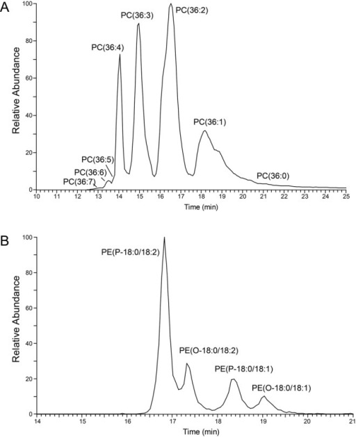 Elution profiles of selected phospholipid molecular species. (A) Elution profile of detected C36-PC molecular species in the positive ionisation mode of a whole cell lipid extract. (B) Elution profile of the most abundant ether-type PE molecular species detected in negative ionisation mode in whole cells. O refers to alkyl, P to alk-enyl molecular species.