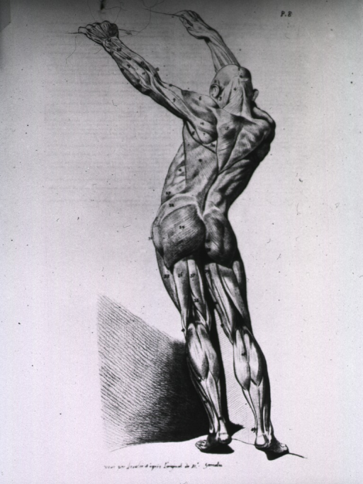 <p>Full length rear view of male body standing with arms raised above the head; musculature defined.</p>