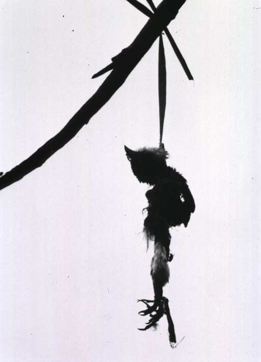 <p>The carcass of a bird hanging from a pole.</p>