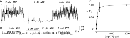 At constant high (1.2 mM) free [Mg2+], [ATP] (≈ [MgATP]) determines opening rate of cardiac CFTR channels. (A and B) Records of unitary currents in two representative inside-out patches (after PKA washout) containing ≥5 (A) phosphorylated CFTR channels (Vh = 20 mV), or only one (B; Vh = 0 mV), respectively. Standard ATP-free bath (cytoplasmic) solution was replaced by one containing a test [MgATP] (1, 5, 50 μM), between exposures to the reference [MgATP] (2 mM), as indicated; solution was exchanged within ∼1 s. Relative Po was determined in each patch as the ratio of that at the test [MgATP] to the mean of the two bracketing Po values at 2 mM MgATP. (C) Summary of relative Po (rel Po) at test [MgATP] of 0, 1, 5, 50, and 200 μM, averaged from 5–20 measurements at each [MgATP] of phosphorylated channels but after withdrawal of PKA. The curve shows the least-squares fit to the Hill equation: rel Po = Po([MgATP])/Po(2 mM) = rel Pomax/{1+(K0.5/[ATP])n}, where n = 0.9 ± 0.2, K0.5 = 35 ± 11 μM, and rel Pomax = 1.04 ± 0.06.
