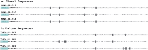Conversion errors can distinguish between clonal and unique sequences. (a) Three clonal sequences from end-coded, single-stranded oligonucleotides (Burden et al., manuscript in preparation). All three sequences bear the expected GTATGTGT batchstamp, indicating that they are from the intended experiment. However, they have the same barcode, TTAGATA, indicating that they are clones. Their shared pattern of failed-conversion events confirms their common origin from a single template molecule. (b) Three unique sequences from end-coded, single-stranded oligonucleotides. Each sequence bears the GTATGTGT batchstamp (bold-faced) used in this experiment, and a unique barcode. These sequences also differ in their patterns of failed-conversion events (dark gray boxes), confirming that they proceeded through the conversion and amplification processes independently.