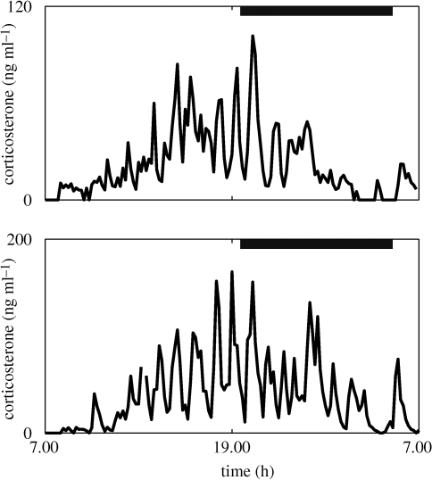 Experimental data demonstrating the ultradian glucocorticoid rhythm underlying the classic circadian profile. Levels of blood corticosterone were recorded over a 24 h period in two individual male Sprague–Dawley rats. Blood samples were collected every 10 min using an automated blood sampling system. Grey bars indicate the dark phase (19.15–05.15 h). Adapted from Spiga et al. (2007).