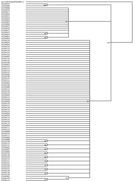 Neighbor-joining tree of a specific HBV-DNA nucleotide fragment (S gene) from viral isolates obtained from the study population. Woolly monkey Hepatitis B virus (GenBank accession number AF046996) was used as an outgroup.