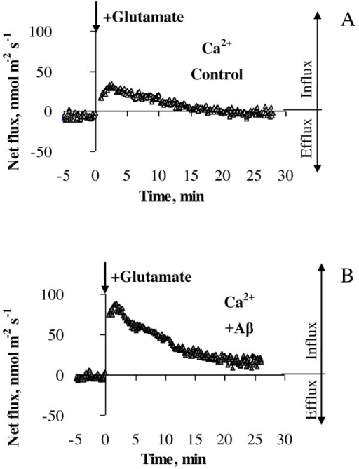Kinetics of Ca2+ fluxes in response to acute application of 10 μM glutamate. Ca2+ fluxes were measured from age-similar control cells (A) and primary cortical neurons treated daily with 1 μM Aβ1-40 for six days (B). Flux values were recorded for 5 min before glutamate application (-5 to 0 min) and 25 min afterwards with data acquired at a rate of 10 samples/sec and averaged over every 6 sec. Glutamate (10 μM) was applied at zero time as indicated by an arrow and led to Ca2+ influx into cultured cortical neurons (positive flux values). One (out of 7) typical example is shown.