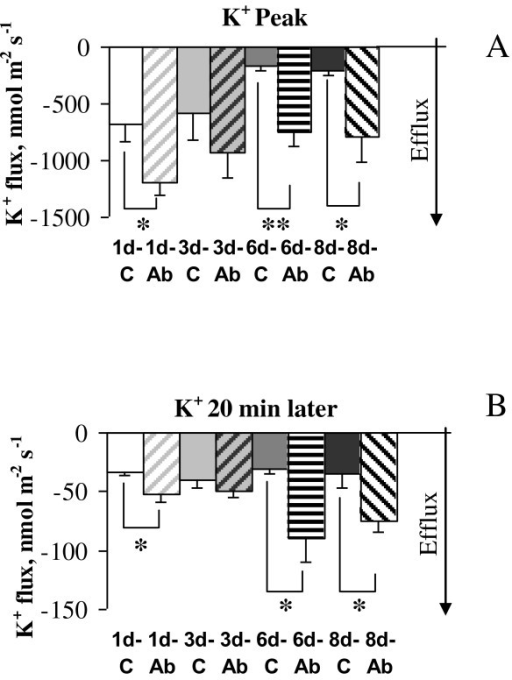Effect of glutamate application on K+ fluxes. Glutamate (10 μM) was applied to cortical neurons following daily treatment with 1 μM Aβ1-40, and to age-matched un-treated control cells. Peak values of K+ fluxes (A) and steady-state K+ fluxes recorded 20 min after glutamate application (B) are shown for one, three, six, and eight days of treatment with Aβ. Peak K+ efflux was substantially (1.6-fold) higher after one day of treatment with soluble Aβ1-40 than in age-similar control cells and further increased to 5.7-fold difference after six days of treatment. The capacity of cortical neurons to retain K+ flux at pre-stress levels after glutamate challenge was assessed by comparing steady-state values of K+ fluxes 20 min post-treatment. K+ efflux in Aβ treated cells was significantly higher than in age-similar controls after treatment with Aβ suggesting that Aβ accumulation by neurons reduces their ability to maintain K+ homeostasis. * - P < 0.05, ** - P < 0.02, t-test. Error bars represent SEM (n = 4-7).