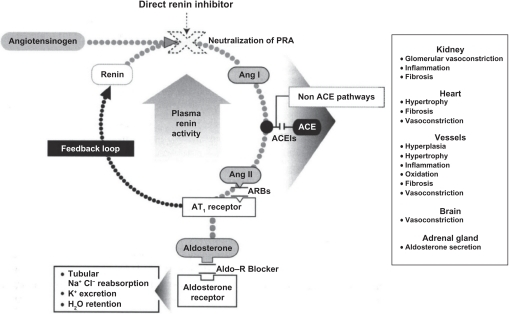 The renin–angiotensin–aldosterone system (RAAS) and | Open-i