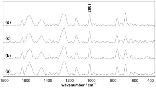 Raman spectrum of Mb system vs. the concentration of Q. The concentrations of Mb and DMSO were maintained at 1.5 × 10-5 mol/L and 10%, respectively. (a) 0 mol/L Q; (b) 3.0 × 10-5 mol/L Q; (c) 9.0 × 10-5 mol/L Q; (d) 1.5 × 10-4 mol/L Q.