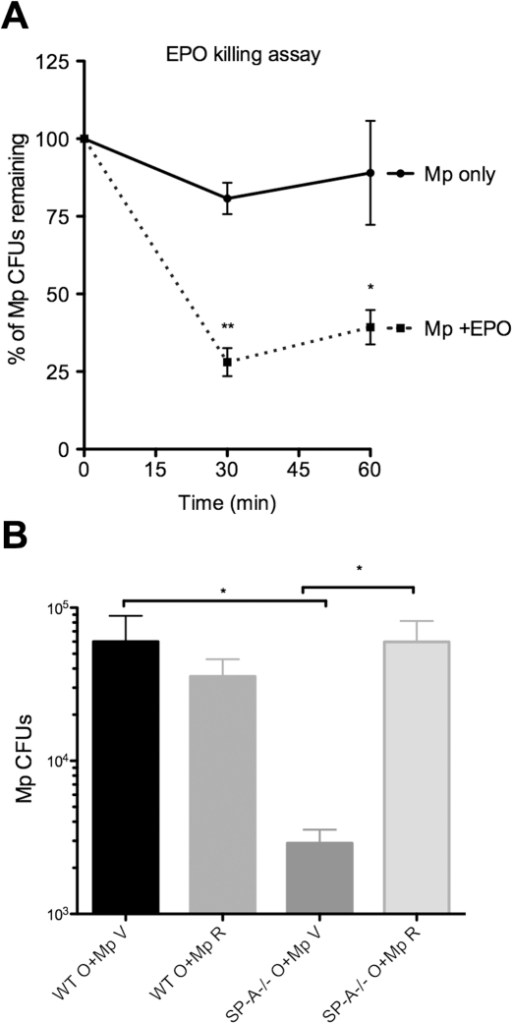 EPO is vital for Mp killing mechanisms in vitro and in vivo.A) Purified human EPO (0.5 µM) was added to Mp (5×106) and viability was assessed over the course of 1 hr. **p<.01,*p<.05. n = 3 experiments. B) Mice were treated with Ova and Mp (O+Mp) as previously described but 2 hrs prior to Mp infection, some mice were given either vehicle (V) or resorcinol (R). Mice were given boosters after 24 hrs and samples harvested at 72 hrs for Mp burden. *p<.05. n = 2 experiments (8–10 mice/group).