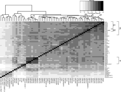 Whole genome heat map, constructed by Mauve, to achieve pairwise percentage of genome sequence alignment. Pair-wise Mauve alignments were conducted with 60 H. influenzae and H. haemolyticus genome sequences from strains included on a single sequencing flow cell. For each pair-wise comparison the length of the alignment achieved, expressed as the percentage of the total sequence length, was calculated and a distance matrix created. The heat map was created using the R statistical package and shows the clustered genomes determined by the default R heatmap function clustering methods (http://www.r-project.org/). At the top of the figure, an indication of the relatedness between genomes is given. Mauve achieved pairwise genome sequence alignments of between 69.8 and 94.4% across our range of genomes. Strains are listed in the same order on the x and y axes; groupings discussed in the text are indicated along the top axis and the relevant strains are indicated by brackets on the right hand side axis, labelled with a Greek letter.