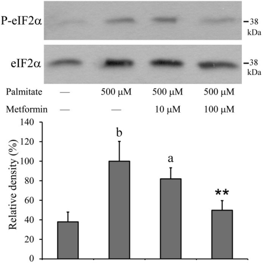 Phosphorylation of eIF2α.Insulinoma cells were treated with palmitate (500 µM) alone or together with metformin (10 µM, 100 µM) at 70–80% confluence. Cell lysates were prepared after 8 h and the phosphorylation and expression level of eIF2α were assessed by Western blot analysis using antibodies specific to phosphorylated (upper panel) and total (lower panel) eIF2α, respectively. Typical results of three independent experiments are shown. The results were quantified by densitometry and are shown as normalized relative band densities. Data are presented as mean values ± S.D. of three experiments in arbitrary units (palmitate-treated = 100%); aP<0.05, bP<0.01 v.s. untreated control; **P<0.01 v.s. palmitate-treated.