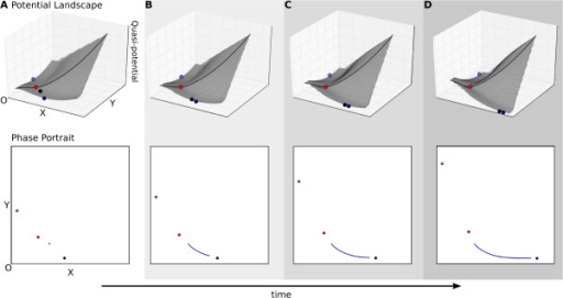 Pursuit stabilising the direction of a trajectory. Pursuit behaviourresults from the movement of an attractor. In this case, both attractor andtrajectory progress in the same direction, which is therefore stabilised evenbefore the system enters any asymptotic regime. Upper panels show(quasi-)potential surfaces, lower panels phase portraits as in Figure 3C. The progress of time is shown through increasingly darkshading, and by the arrow at the bottom of the figure. (A) Pursuitbehaviour shows similarities to autonomous dynamics, since the location of theinitial condition determines the attractor towards which the system willconverge. In this example, parameter changes do not alter the position of theseparatrix. (B–D) However, the approach of the system towards theattractor is very different than in the autonomous case, since both attractorsmove away from the origin as activation strength (represented byαx andαy in equation 1) is increased over time.This leads to an enduring pursuit by the trajectory of its moving attractortarget. See also Additional file 2, Supporting MovieS2.