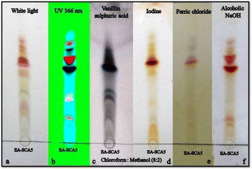 TLC profile of the active crude from soilStreptomyces lavendulaestrain SCA5. a. Viewed under normal white light. b. Viewed under UV 366 nm. c. Derivatization with 10% alcoholic sulphuric acid. d. Exposure to iodine vapour. e. 0.01% ferric chloride. f. 0.01% alcoholic NaOH.