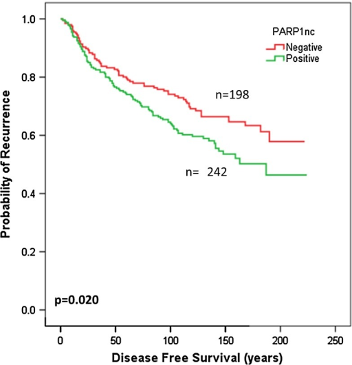 Kaplan–Meier curve for DMFS with respect to PARP1 (non-cleaved) expression in the BRCA1 positive-tumours
