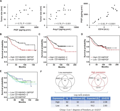 Tie-2 and VEGFR-1, and Ang-2 and PIGF represent attractive targets in breast cancer (A) Correlation of Ang-2 and PlGF and CD14 protein expression levels in the tumor with tumor size in 17 patients.The significance of their linear correlation is shown by Pearson r and p values. (B-F) Survival analysis. The good prognostic effect of the lower expression of CD14, ANG-2 and PIGF (B) is reflected by the clear separation from the over expression group on the Kaplan-Meier plot, with a P value of 0.0257 from a Log-rank test (F), whereas only ANG-2 (C) or PIGF (D) combined with CD14 separate worse lower and over expression groups, suggesting a synergistic effect of ANG-2 and PIGF to promote CD14-mediated angiogenesis and the corresponding impact on patient relapse free survival. (E) Shows the survival curve of lower expression patients for the three cases.