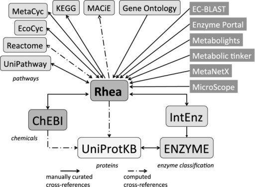 Interactions between Rhea and other resources. Rhea provides cross-references to chemical entities of ChEBI (2), to biochemical reactions of EcoCyc (19), MetaCyc (20), KEGG (18), MACiE (16), Reactome (17) and UniPathway (21), to EC numbers of IntEnz (10) and to protein sequences of UniProtKB (15). The Gene Ontology (GO) is closely aligned with ChEBI , and GO molecular functions describing enzymatic reactions cross-reference Rhea (29). Rhea is one of the reaction repositories employed by MicroScope (9), an integrated resource for the curation and comparative analysis of genomic and metabolic data of microbes. Rhea also provides metabolic reactions for a number of other resources including the EBI Enzyme Portal (5), the reference layer of the MetaboLights resource (6), the metabolic model analysis and reconciliation platform of MetaNetX.org (7,8), EC-BLAST (11) and Metabolic tinker (12).