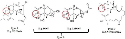 Type B trichothecenes are characterized by a carbonyl group at C-8. In comparison, type A trichothecene mycotoxins may have an –H, –OH, or –OAcyl group at C-8, while type D lack functional groups at C-8 and possess a complex linkage from C-4 to C-15.