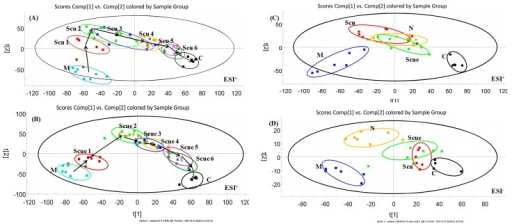PLS-DA analytical results from urine samples of BCCAO rats treated with Scu (A) or Scue (B) at six therapeutic cycles in positive mode.C, sham-operated group (0–12 h); M, model group (0–12 h); Scu 1–6, after administration of Scu for 0–12 h (Scu1), 12–24 h (Scu2), 24–36 h (Scu3), 36–48 h (Scu4), 48h-60 h (Scu5) and 60–72 h (Scu6); Scue 1–6, after administration of Scue for 0–12 h (Scue1), 12–24 h (Scue2), 24–36 h (Scue3), 36–48 h (Scue4), 48h-60 h (Scue5) and 60–72 h (Scue6). PLS-DA analytical results from BCCAO rat urine samples treated with Scu, Scue, and nimodipine at 12–24 h in positive (C) and negative modes (D). C, sham-operated group; M, model group; Scu, after administration of Scu; Scue, after administration of Scue; N, after administration of nimodipine.