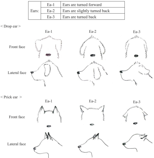 Categories of ear (Ea) appearances in dogs during their training.