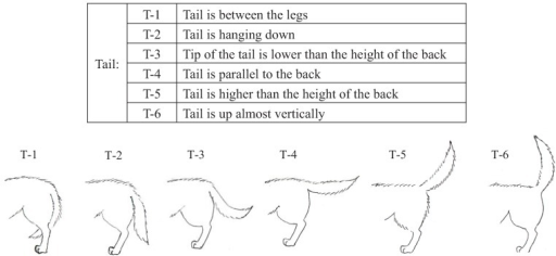 Categories of tail (T) body language in dogs during their training.