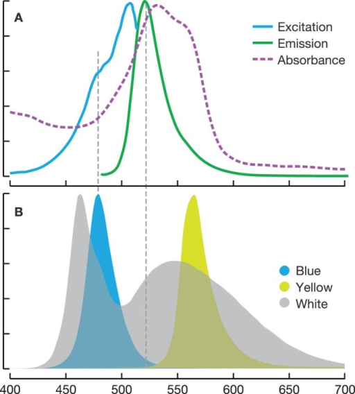 LED spectra subset. (A) Excitation (blue) and emission (green) of the green fluorescent protein and absorbance spectrum of the pink chromoprotein in tentacle tips of O. formosus. (B) LED emission spectra for the three treatments used in the experiment. Blue LED excites the fluorescent protein with minimal overlap with the emission spectrum (dashed grey line). Yellow LED is longer wavelength than the excitation spectrum of the fluorescence. X-axis, wavelength in nm.