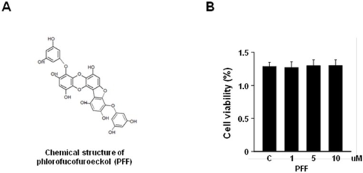 Cytotoxic effect of PFF in PC12 cells.(A) Chemical structure of PFF. (B) PC12 cells were treated with increasing concentrations of PFF or a vehicle control for 24 h. Cell viability was assessed with the MTT assay. Data represent the means and SD of three independent experiments. SC, vehicle control (0.01% DMSO).