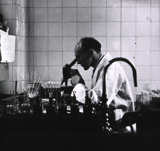 <p>Bacteriologist using microscope.</p>