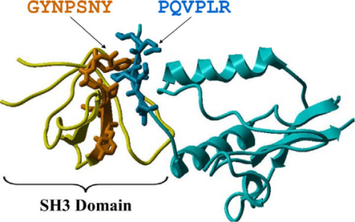 evidence from pdb structural data sh3 domain vs px open i