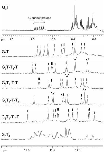 1D imino proton NMR spectra of the quadruplex-forming oligonucleotides. The samples (100 µM) were prepared in 200 mM potassium phosphate pH 7.4. The top panel shows the 1D-NMR spectrum for G3T between 5 and 15 p.p.m., while the other panels show the imino proton region for each oliogonucleotide. The individual peaks are indicated.