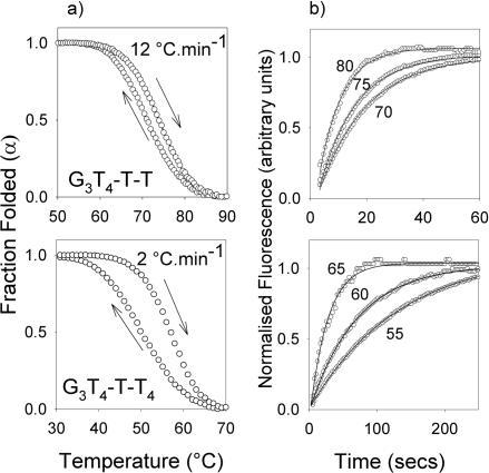 (a) Hystersis between the melting and annealing profiles for G3T4-T-T (upper panel, with a temperature change of 12°C.min−1) and G3T4-T-T4 (lower panel, with a temperature change of 2°C.min−1 in the presence of 10 mM lithium phosphate pH 7.4 containing 20 mM KCl. (b) temperature-jump relaxation profiles for G3T4-T-T (upper panel) and G3T4-T-T4 (lower panel. The traces show the rate of approach to a new equilibrium following a rapid 5°C increase in temperature to the value shown. The profiles have been normalized to show the fractional change in fluorescence with time.