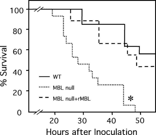 Increased mortality in MBL- mice from S. aureus infection. S. aureus was inoculated i.v. and survival was followed as described in Materials and Methods. Numbers of mice used were 15 WT, 14 MBL-, and 9 MBL- plus rhMBL. *, P < 0.0001.