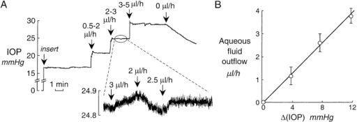 Aqueous fluid outflow by the continuous infusion method. (A) Representative experiment showing IOP recording in response to continuous fluid infusion. Fluid was infused continuously into the anterior chamber by a micropipette to obtain constant specified IOP. Infusion was transiently increased to >10 μl/h to increase IOP, followed by empirical changes by in 0.5-μl/h steps to keep IOP constant. (inset) Magnified view for setting IOP to ∼25 mmHg. (B) Aqueous fluid outflow versus Δ(IOP) (IOP − IOPo) determined from experiments as in A. Mean ± SE, n = 8 eyes.